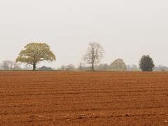 Fields near Puttenham-F4160664-Edit (tony.rummery) Tags: agriculture countryside epm1 farm fields haze mft microfourthirds mist olympus pen ploughed puttenham surreyhills trees guildford england unitedkingdom