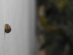 DO YOU KNOW ...? (Poppy Cocqué ♫) Tags: ap poppy poppycocqué snail wall bokeh shell stripes humbug sooc straightoutofcamera
