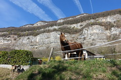 Horse @ Hike to Montagne de la Mandallaz & Lac de la Balme de Sillingy (*_*) Tags: 2019 printemps spring savoie afternoon march annecy 74 hautesavoie france europe sunny hiking mountain montagne nature walk marche jura mandallaz animal horse cheval randonnee sillingy