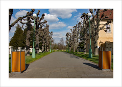 Palace Gardens (prendergasttony) Tags: people garden bin lamp lights nikon d7200 prague phara europe palace trees pollared stunted