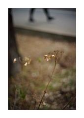 2019/3/16 - 12/15 photo by shin ikegami. - SONY ILCE‑7M2 / Voigtlander NOKTON CLASSIC 40mm f1.4 SC VM (shin ikegami) Tags: asia sony ilce7m2 sonyilce7m2 s7ii 40mm voigtlander nokton nokton40mmf14sc tokyo photo photographer 単焦点 iso800 ndfilter light shadow 自然 nature 玉ボケ bokeh depthoffield naturephotography art photography japan earth