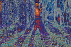 (psychedelic world) Tags: wohltorf wald wood forest baum tree bäume trees branches äste nature natur schatten shadows light licht outdoor sachsenwald psychedelicworld psychedelic psychedelisch zweige
