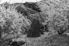 The Slab _ bw (Joe Josephs: 3,166,284 views - thank you) Tags: centralpark landscapephotography manhattan nyc nycneighborhood newyorkcity spring travel travelphotography landscapes rocks geology urbanpark urbanexploration citypark springfoliage bw monochrome blackandwhite