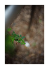 2019/3/16 - 13/15 photo by shin ikegami. - SONY ILCE‑7M2 / Voigtlander NOKTON CLASSIC 40mm f1.4 SC VM (shin ikegami) Tags: asia sony ilce7m2 sonyilce7m2 s7ii 40mm voigtlander nokton nokton40mmf14sc tokyo photo photographer 単焦点 iso800 ndfilter light shadow 自然 nature 玉ボケ bokeh depthoffield naturephotography art photography japan earth