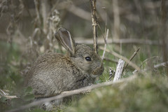 Easter bunny... (- A N D R E W -) Tags: easter bunny bokeh a7rii tamron 150600mm seasonal friday rabbit sony mirroless ef metabones iv good