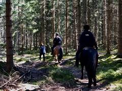 På tur… (Patrick Strandberg) Tags: sweden östergötland benji eilifur horses hästar iphone iphonex