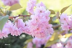 Flowers (Foto . Joe) Tags: flowers bloemen nikon