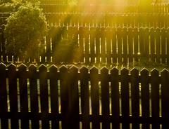 BRY_20081228_CIMG1101_ (stephenbryan825) Tags: merseyside netherley backlighting backlit bush dawn fence garden morning orange pattern rays repetition suburbia sunlight uniformity