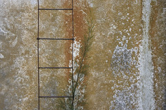 Óxido (Ce Rey) Tags: wall pared óxido textura texture escalera stair metalic metal abstract abstracto oxidated dacay abandono abandoned 15challengeswinner