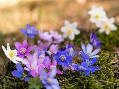P4196873 (gert.lutter) Tags: photo closeup flora flower nature
