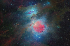 The Orion Nebula M42 (with stars) (Terry Hancock www.downunderobservatory.com) Tags: qhy qhy367c takahashi sky space astronomy astrophography astroimaging universetoday cosmos