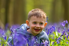 My Blue Eyed Boy, Amongst The Bluebells (CJD imagery) Tags: canonef70200mmf28lisiiiusm canoneos80d springtime spring memories love family child boy son portraiture portraitphotography portrait flora flowers nature bluebells pryor'swood hertfordshire stevenage england gb greatbritain uk unitedkingdom