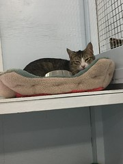 Arlo - 1 year old neutered male