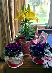 Mom didn't want an #Easter corsage this year, so we went with a different kind of floral arrangement. #flowers #flower (nomad7674) Tags: easter flowers flower lily yellow purple violet african 2019 april holyweek 20194019