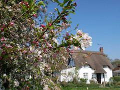 The village of Martin (auroradawn61) Tags: goodfriday easter uk england spring 2019 sunny countryside martin village cottage hampshire blossom