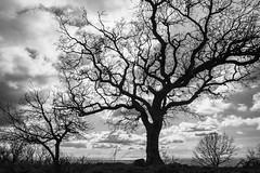 Cielo e alberi (sensdessusdessous) Tags: cielo sky alberi trees
