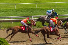 Race 3 - the first pass (avatarsound) Tags: boston suffolkdowns horse horseracing horses jockey jockeys race racetrack racing rider riding sport
