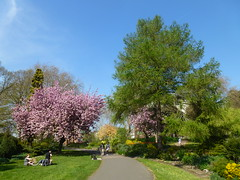Sunny Spring 2019 (KiranParmar) Tags: sunny spring 2019 leicester april flower bloom tree pink castle garden