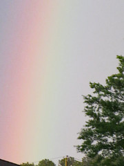 Zoomed In On A Rainbow. (dccradio) Tags: lumberton nc northcarolina robesoncounty outside outdoor outdoors nature natural rainbow sky red orange yellow green blue indigo violet tree trees greenery branch treebranch branches treebranches treelimb treelimbs canon powershot elph 520hs