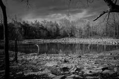 IMG_8468 (Drejitzu) Tags: blackwhite focus photo streetphotography zoom macro free live forest zen