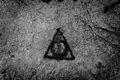 IMG_8458 (Drejitzu) Tags: blackwhite focus photo streetphotography zoom macro free live forest zen