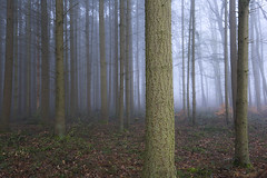 Early spring (Fabien Husslein) Tags: frisange freiseng luxembourg luxemburg letzebuerg foret forest wood bois arbre tree fog mist brouillard nature spring mood