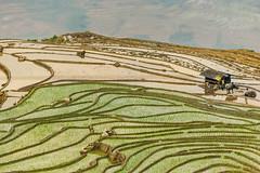 _Y2U2006.0514.Y Tí.Bát Xát.Lào Cai (hoanglongphoto) Tags: asia asian vietnam northvietnam northeastvietnam northernvietnam landscape scenery vietnamlandscape vietnamscenery ytilandscape terraces terracedfields terracedfieldsinvietnam transplantingseason sowingseeds people landscapeandpeople abstract curve canon canoneos1dx canonef100400mmf4556lisusm đôngbắc làocai bátxát ytí ruộngbậcthang ruộngbậcthangytí ytímùacấy ytímùađổnước phongcảnhcóngười happyplanet asiafavorites