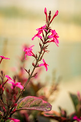 The Spring is here (ZillayAli) Tags: sony a7iii a73 mirrorless sonyfe50mm f18 prime femount sonyfe flowers flora colours details landscape city