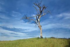 Solitario (Zz manipulation) Tags: art ambrosioni zzmanipulation albero solitario natura campagna cielo nuvole