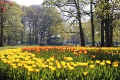 Vive le printemps 🌞🌞🌞 (RW-V) Tags: canoneos70d tamron18400mmf3563diiivchld apeldoorn oranjepark paysbas thenetherlands niederlande nederland tulips tulipes tulpen colourful urbannature printemps frühling spring lente 225faves 275faves 325faves 375faves 425faves 2500views 475faves 500faves