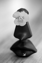 still-life 20-04-2019 007 (swissnature3) Tags: stilllife macro flowers flacon