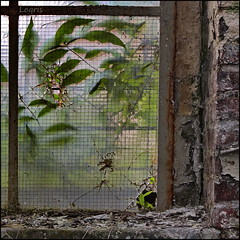 Nice view in the garden (Logris) Tags: old factory fabrik window nature fenster abandoned decay verlassen alt eos canon