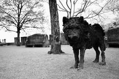 Wolf (sebastienvillain) Tags: switzerland suisse fujifilm fuji xe2 xseries noiretblanc blackandwhite bw nb monochrome wolf loup statue neuchatel xf18mm