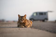猫 (fumi*23) Tags: ilce7rm3 sony sel85f18 85mm fe85mmf18 emount a7r3 animal katze gato neko cat chat bokeh dof harbor ねこ 猫 ソニー
