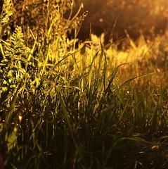 (Monic@*) Tags: verde sunset light sun green luce sole