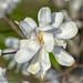 1 blossoms