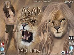 Asad avatar pale (Alea Lamont) Tags: ndmd asad lion avatar omega skin appliers catwa vista signature belleza male head body slink ak