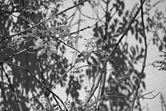 20190420_大阪_0062_sdQuattroH (mu_x2012) Tags: osaka japan sigma sd quattro h 35mm f14 dg hsm art