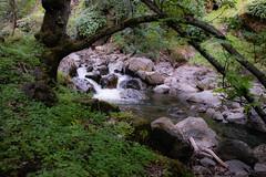 DSF_6820-1 (Gedawei 葛大为) Tags: nikon alumrock creeks california northerncalifornia sf bay area sanjose unitedstatesofamerica