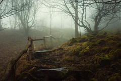 Kalbe Path (artmobe fotografie) Tags: hoher meisner kalbe pfad nebel hessen nordhessen stufen treppe