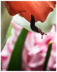 Hang On (frosty22727@sbcglobal.net) Tags: macro macrophotography macroperfection insect macrocaptures macroworldtr closeup macroclique macrovision insects macrofreaks macromood macros topmacro macrobrilliance bnsmacro igbestmacros macroworld flowersandmacro macrohighlight macrosecrets macrospotlight macroholic flower macrogardener macroshot bug macrolove majesticmacros