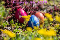 Happy Easter to All of You! (Hamburg PORTography) Tags: spring frühling springtime ostern easter eggs eier froheostern happyeaster 2019 easteregg osterei ostereier eastereggs againstautotagging