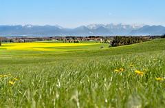 München Umland (madmattus) Tags: sonya7iii frühling alps sun colors color bavarian germany field