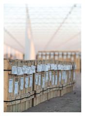 Building the new greenhouse (leo.roos) Tags: kas greenhouse hothouse monster molenweg boomaweg westland sunset zonsondergang a7rii iscogöttingenkiptar11020 projectorlens projector projectionlens darosa leoroos