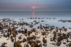 Kelp Sunset (Keith - Glasgow) Tags: seaweed calm kelp scotland sunset seascapes dusk water sea dunure ayrshire landscapes coast shore rocks