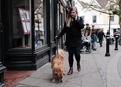 Dog Walking (Bury Gardener) Tags: suffolk streetphotography street streetcandids snaps strangers candid candids peoplewatching people folks england eastanglia uk 2019 fuji fujifilm fujixt3 traverse