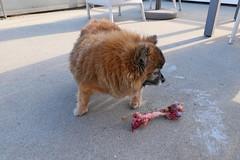 bone (Leifskandsen) Tags: dog bone eat easter animale norway camera leica living leifskandsen light