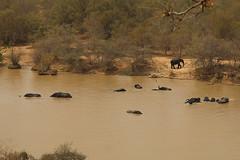 Savanna elephants, Mole National Park, Ghana (inyathi) Tags: africa westafrica ghana africananimals africanwildlife africanelephants savannaelephants elephanrts loxodontaafricana molenationalpark molemotel