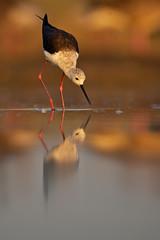 _DSC4631 (Niklas_N) Tags: bird nature wildlife