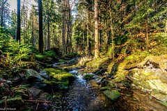 Unterwegs im Wald (Andi Fritzsch) Tags: wald forest baum tree trees creek bach fluss river riverscape riverscapephotography spring springtime frühling frühlingszeit natur nature naturephotography landschaft landscape landscapephotography nikond7100 sigma1020mm erzgebirge